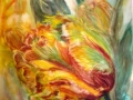 Tulipes perroquet ( VENDU )